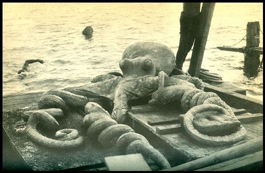 williamson-octopus.JPG