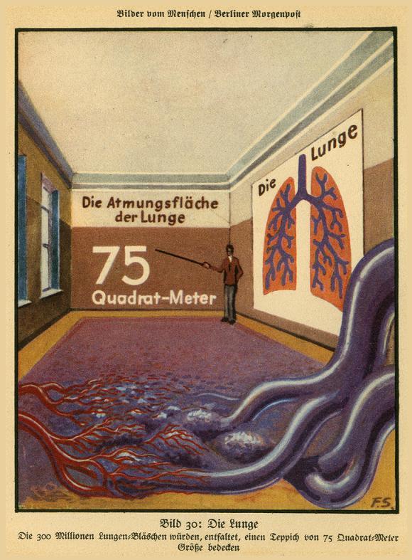 bilder-vom-menschen-1931.JPG