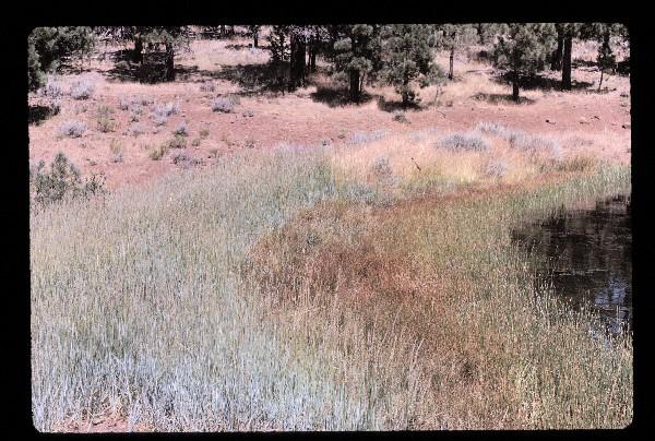 gus-hormay-1964-8-11-california.jpg